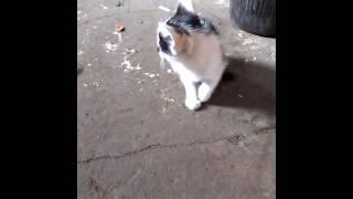 чёрно-белый малыш котёнок ищет дом