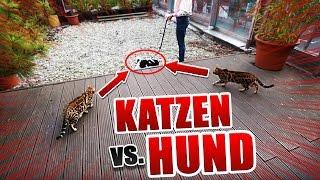 Hund VS Katze Showdown