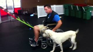 The Great Ones: Service Dog Training Charlotte North Carolina