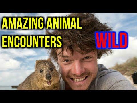 Ultimate WILD Animal Compilation!