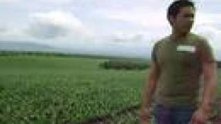 Gensan-Sinawal Philippines: Pineapple Fields Documentary