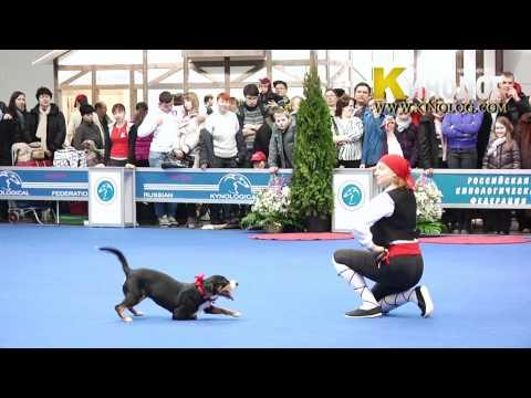 "15 Dog Show ""Eurasia  2012 / Russia / Moscow"". Freestyle."
