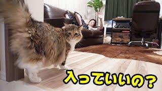猫を入ったことない部屋に連れて行ってみた