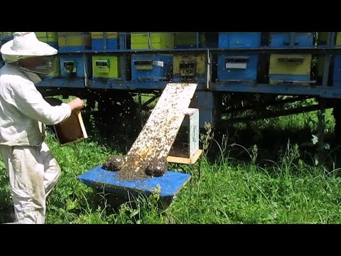 Как предотвратить роение пчел видео