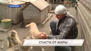Спасти от жары собак(Документальний фільм TV5