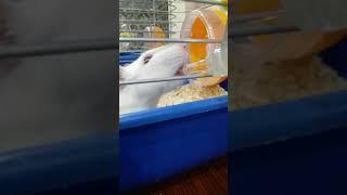 крыса пьёт 🐭🥤