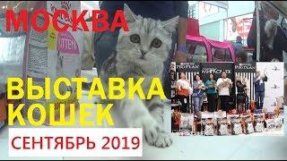 Смотреть видео Выставка кошек WCF. Москва сентябрь 2019 | WCF cat show. Moscow September 2019 онлайн