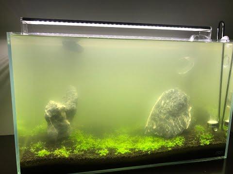 Bacterial Bloom In My Tank! Help! #fishfammom #bacterialbloominmytank