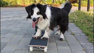 Skateboarding Dog !