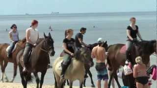 Конная прогулка по пляжу