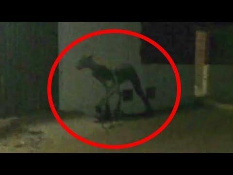 5 Aterradoras y extrañas criaturas captadas en Sudamérica
