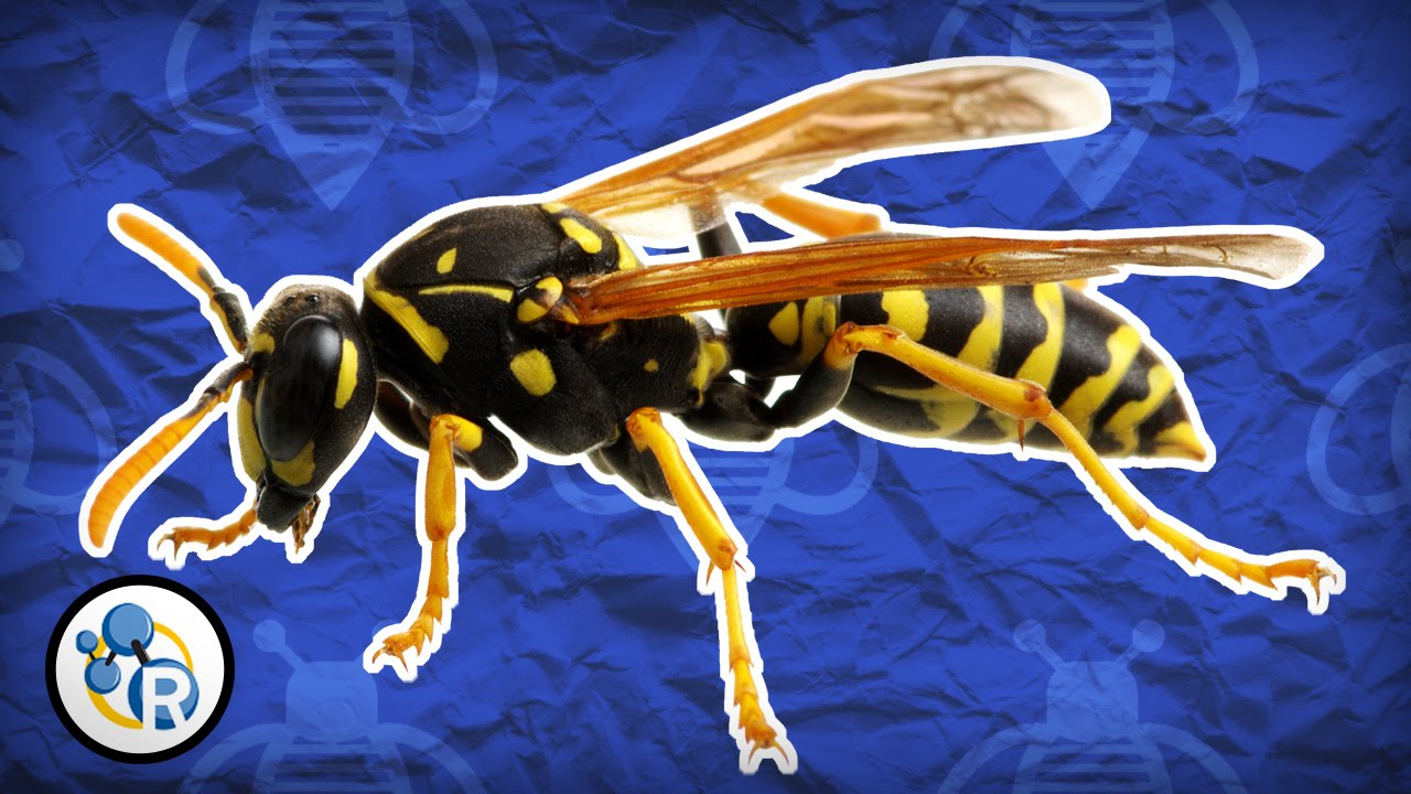 Why wasps attack and how to avoid them | TreeHugger