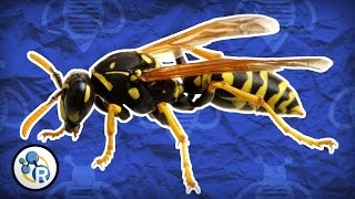 Why Do Wasps Attack? - Reactions Q&A