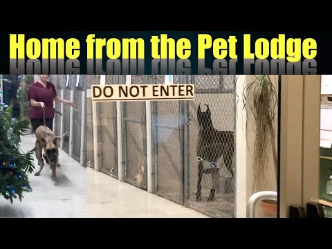 home-from-the-pet-lodge