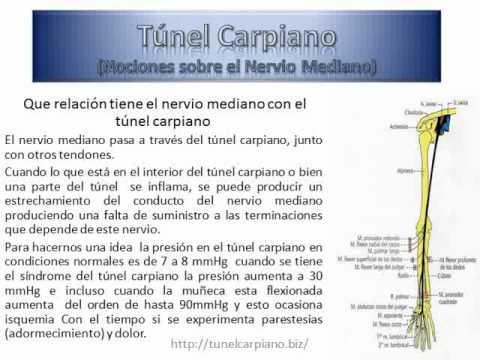 Anatomía del Nervio Mediano - YouTube