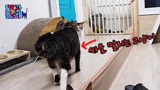 싸움 말리는 고양이 경자 / 집사보다 고생이 많은 고양…