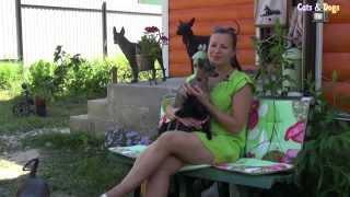 Cats&DogsTV - УДИВИТЕЛЬНЫЙ МИР СОБАК - КСОЛОИТЦКУИНТЛИ, МЕКСИКАНСКАЯ ГОЛАЯ СОБАКА / XOLOITZCUINTLE