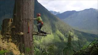 Kanada ormanlarında ağaç kesimi