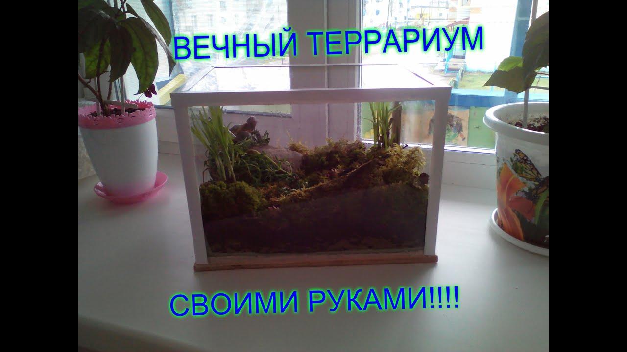 Сделать аквариум для улитки своими руками