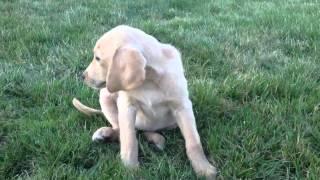Video Sneezy Sandy dog download MP3, 3GP, MP4, WEBM, AVI, FLV November 2017