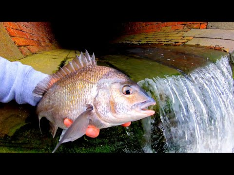 FISHING OUT OF A DRAIN!!!