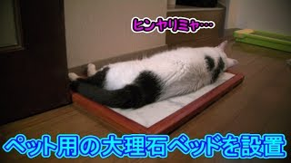 猫 おもしろい