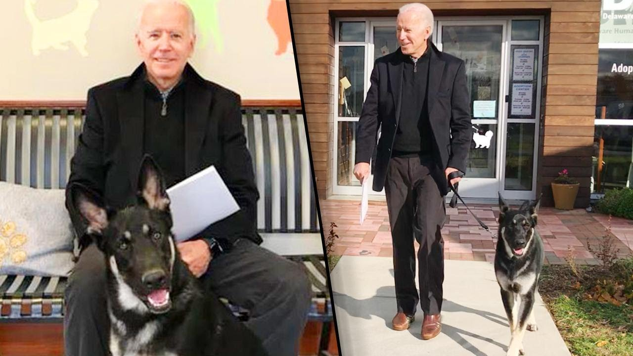 Meet America's New First Dogs, Champ and Major Biden