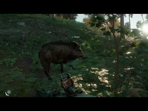 Far Cry New Dawn - Horatio (Giant Boar Partner) Scares Away Badger, Pet Him Gameplay (2019)