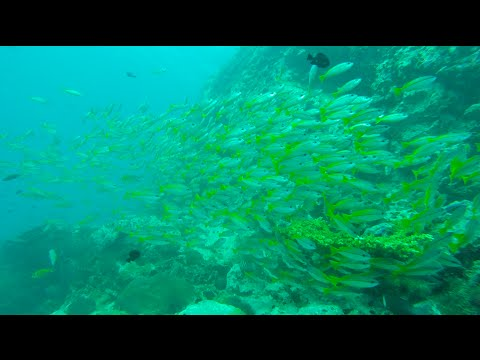 So many fish! Reef dive in Malaysia