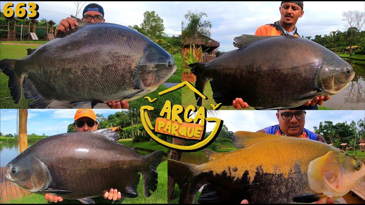 Uma maratona em busca dos grandes TAMBAS do ARCA PARQUE - Programa Fishingtur na TV 663