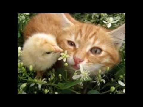 Gattini e cagnolini tenerissimi youtube for Buongiorno con gattini