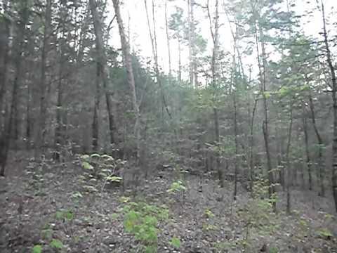 WOOD THRUSH bird-songs from the Georgia Blue Ridge Mountains
