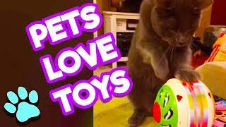 The Life of Pets - Pets Love These Treats and Toys | #thatpetlife thumbnail