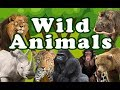 WILD ANIMALS   Learn Wild Animals Sounds and Names For Children  Kids And Toddlers