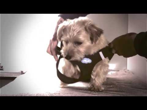 Curli Air-Mesh Köpek-Kedi Göğüs Tasması