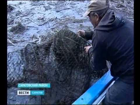 весенний запрет на рыбалку в саратовской области