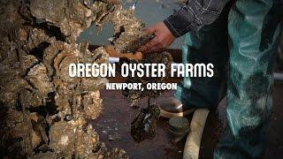Oregon Oyster Farms