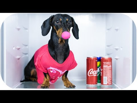 1 April dog prank! Funny animal video!