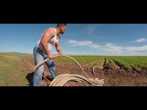 Alfredo Fernández - El Bitache Official Video