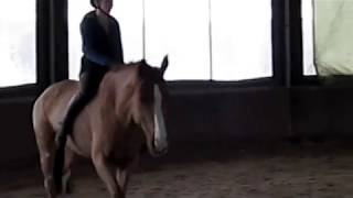 Training a horse to be ridden without a saddle or bridle
