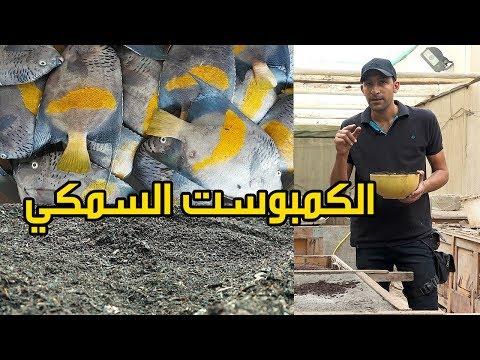 صناعة الكمبوست السمكي How To Make Fish Compost