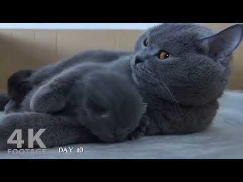 1 to 64 days Development of kitten