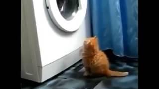 Самые смешные приколы с кошками Юмор! Прикол! Смех