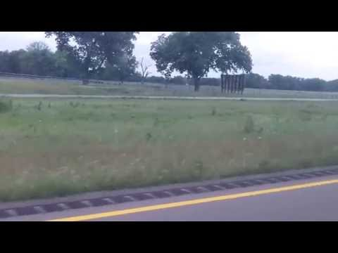 Unused milkweed in median for miles 5/16/2016 Oklahoma