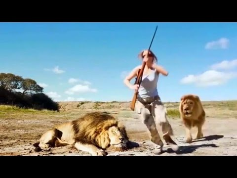 Could This Video Of Trophy Hunters Getting Attacked By A Lion Be Real?