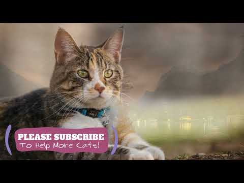 Magic Cat Music - 2 Hours Relaxing Music for Pet Cats! ☯LCZ59