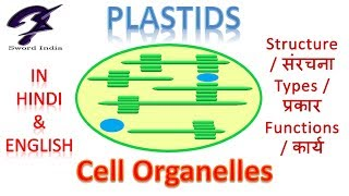 Cell Organelles-Plastids | Structure, Types , Functions | In Hindi & English