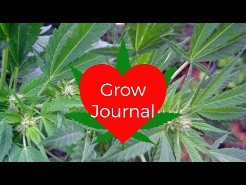 Grow Journal: Outdoor Hydroponics Santa Maria