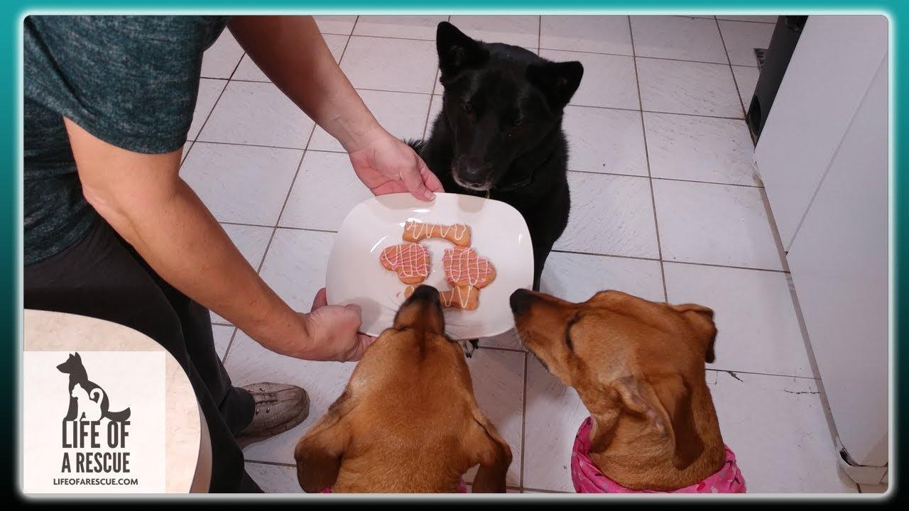Valentine S Day Dog Treats Diy Dog Treats Homemade Dog Treats