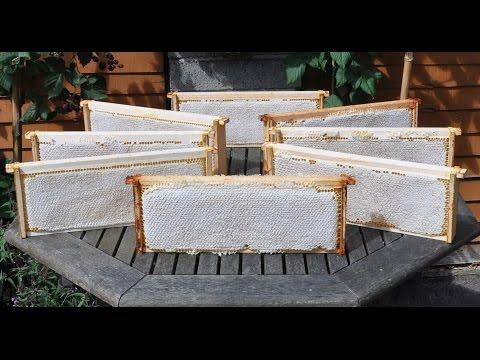 Пчелиный забрус: что это такое и чем он полезен